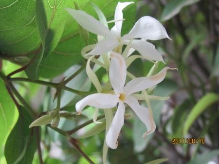 Ashram nature pics 030