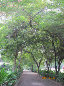 delhi-ashram-nature-photos-009