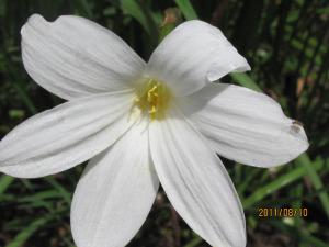flowers-ashram-025